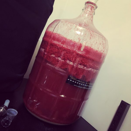 a carboy with fermenting beer