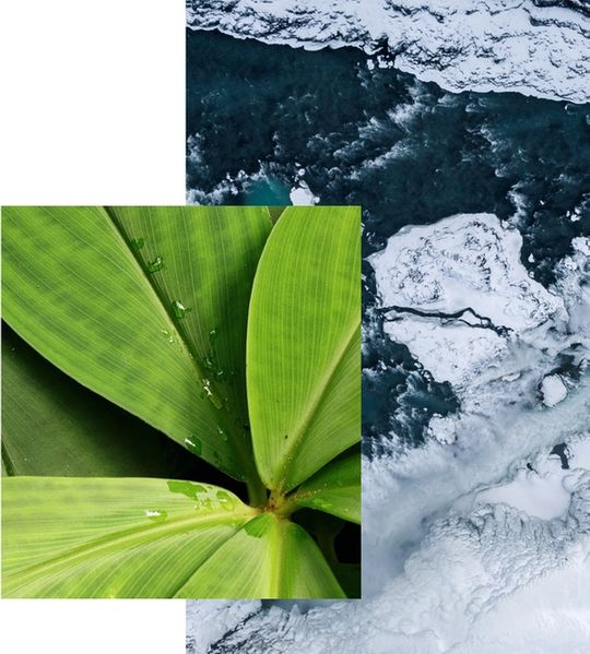 plant and water collage scene