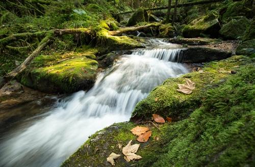 Stateful Stream Processing with Kafka and Go