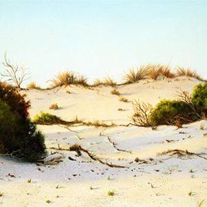 Return To Camel Bend