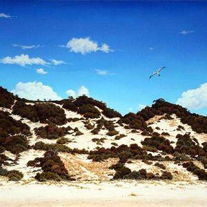 D'Arry's Dunes