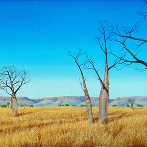 Wyndham Boab Landscape