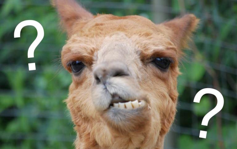 Confused Llama