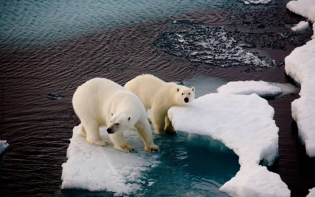 Naturvern, klima og dyrevelferd