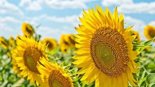 Gi en sommergave som gleder flere