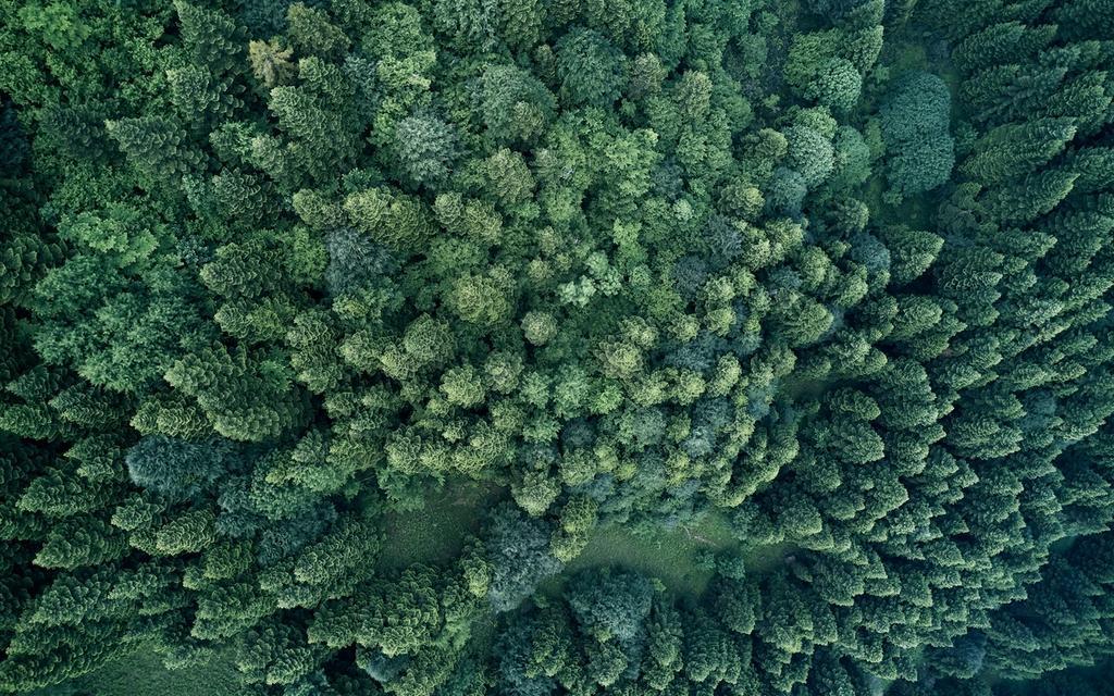 Naturvern