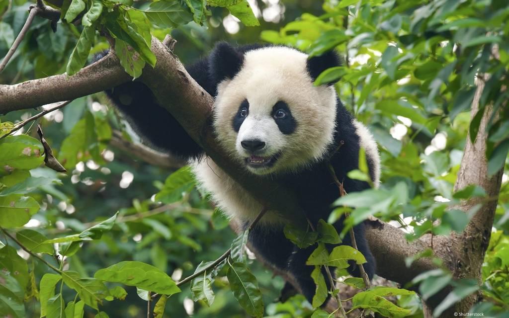 WWF Verdens naturfond