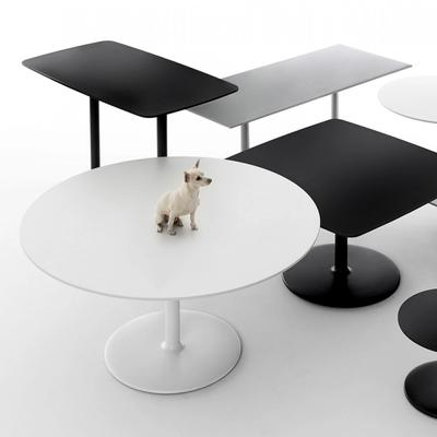 Black and white tables with dog sitting on table