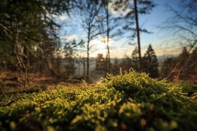 clump of moss in a forest