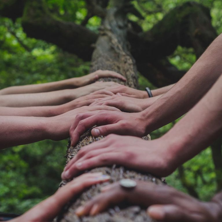 hands on tree trunk