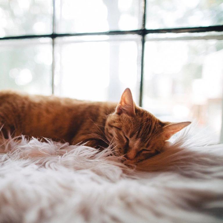 ginger cat sleeping on pink fluffy blanket by a window