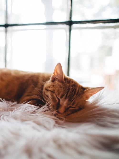 ginger cat sleeps on a pink fluffy blanket in dappled sunlight
