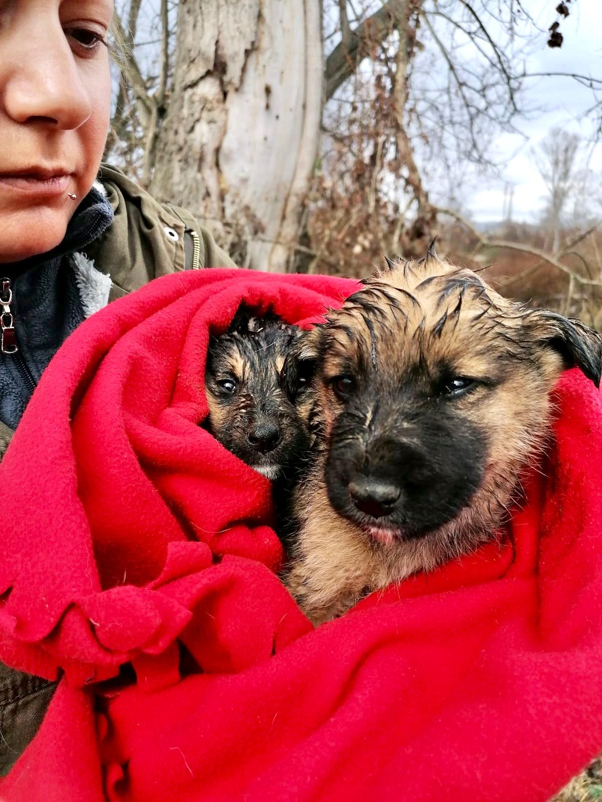 saved-puppies