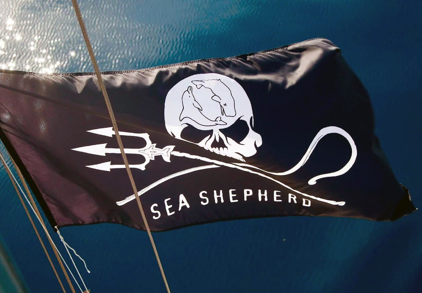 A photo of a Sea Shepherd flag.