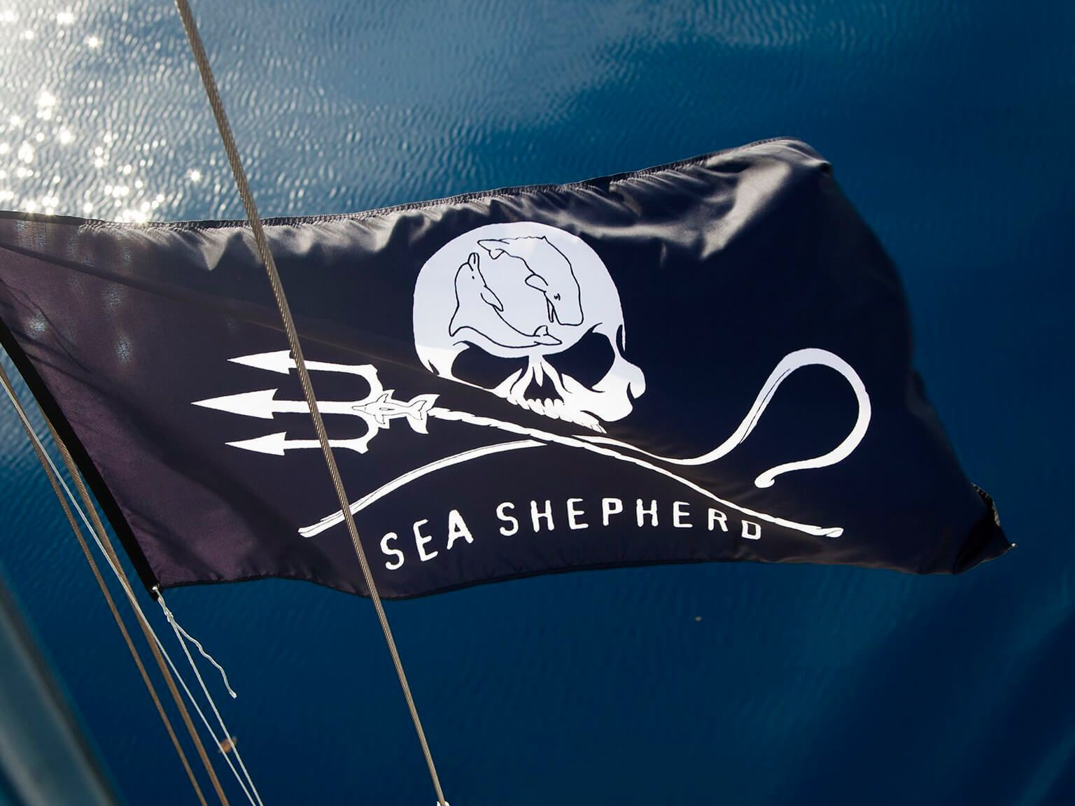A photo of the official Sea Shepherd maritime flag in the sun with the sea in the background