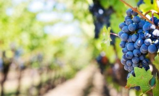 Visiting the Winelands | Your Options from Cape Town