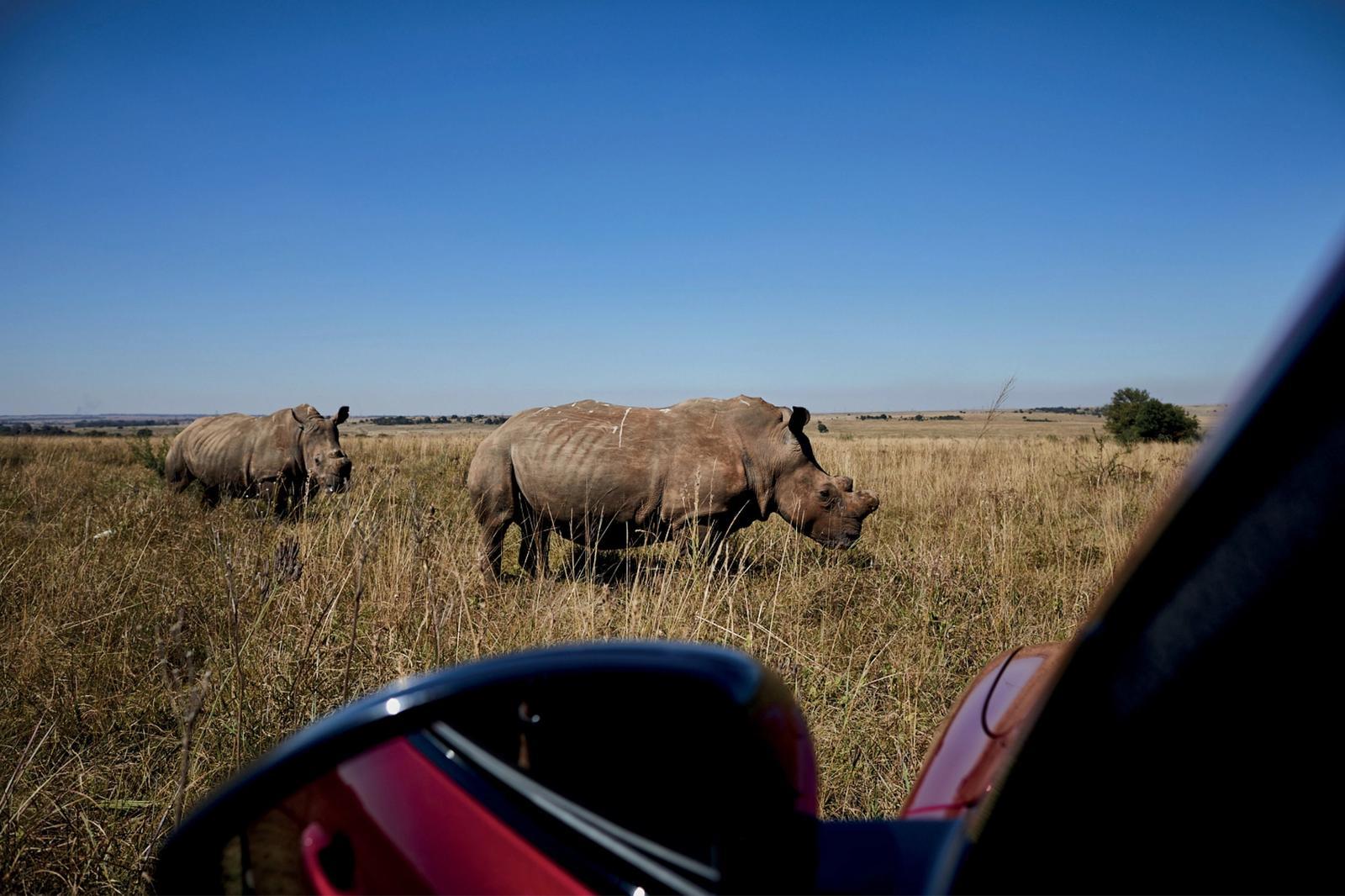 Jaguar Landrover Rhino