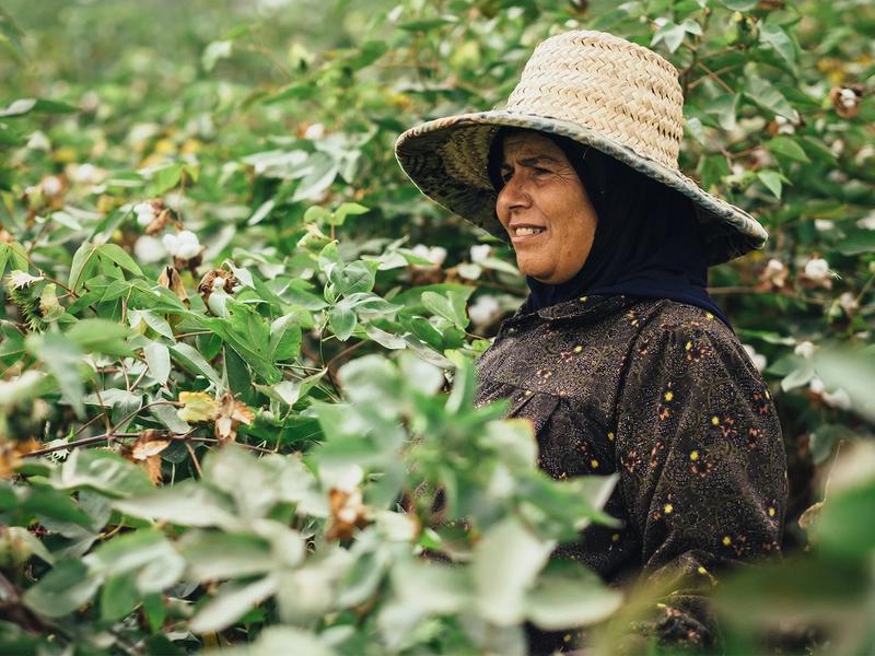 A woman in an Egyptian cotton Kotn farm