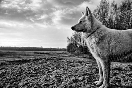Korte Hondenwandeling