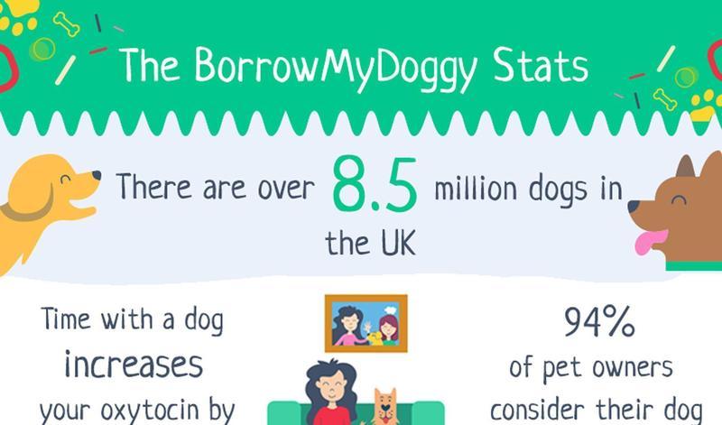The BorrowMyDoggy Stats