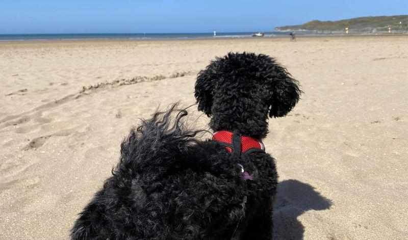 3 top tips to keep your dog safe at the beach