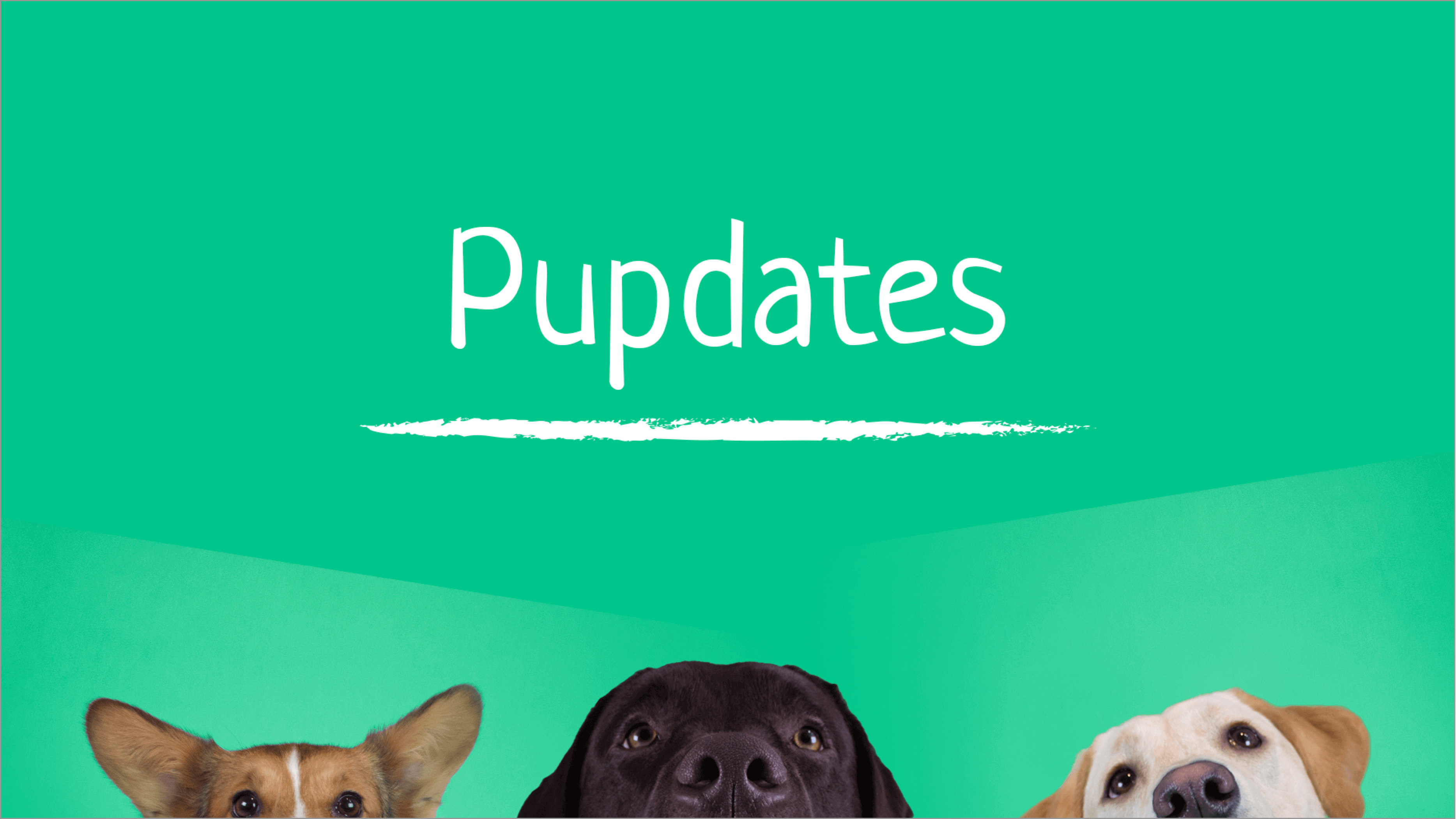 COVID-19: An update about safe dog sharing
