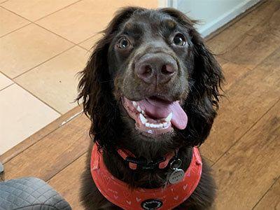 Doggy member Poppy