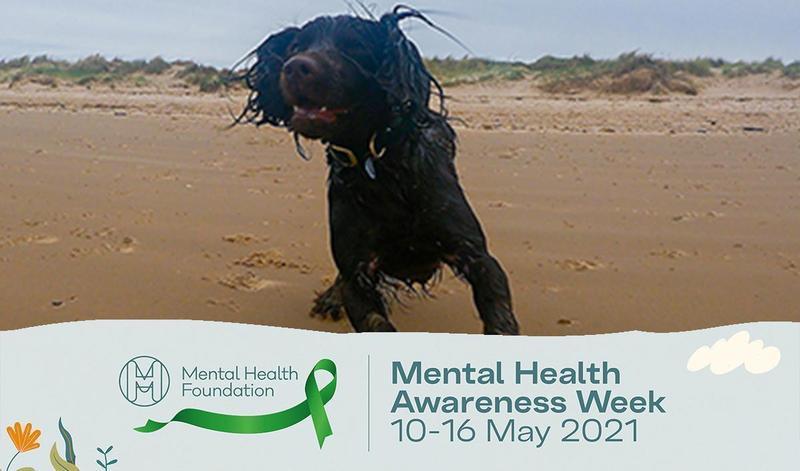 Virtual dog walk | Mindfulness with Wicket