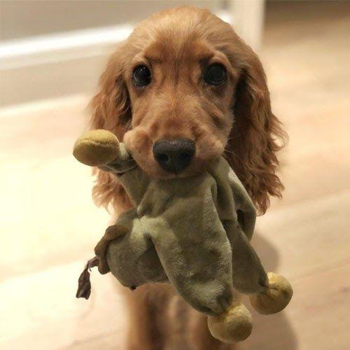 Doggy member Muesli
