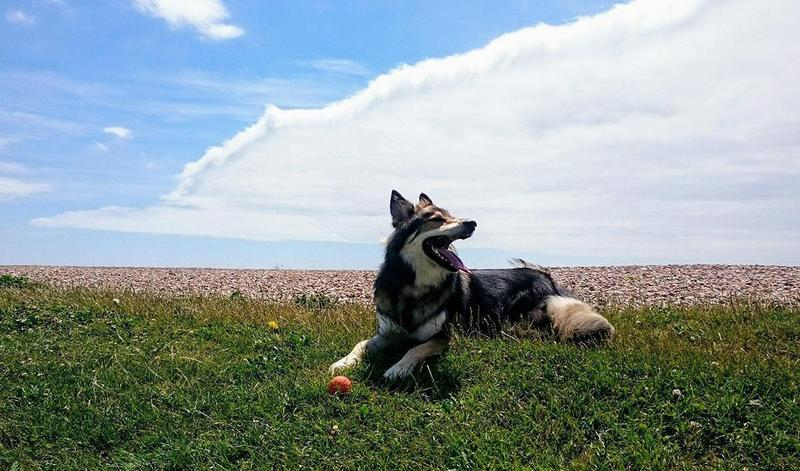 Quiz | Perfect holiday and perfect dog