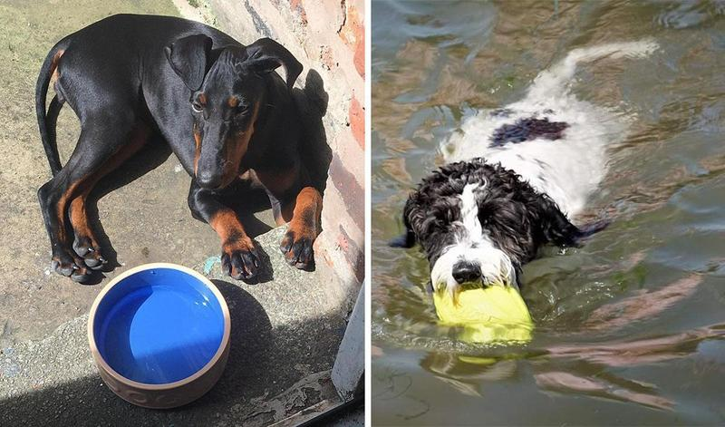 Top 10 items your dog needs this summer