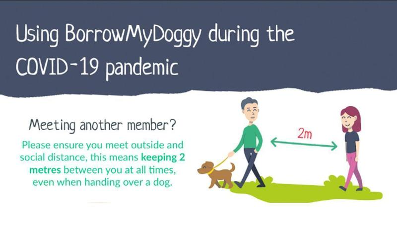 How to dog share safely during COVID-19