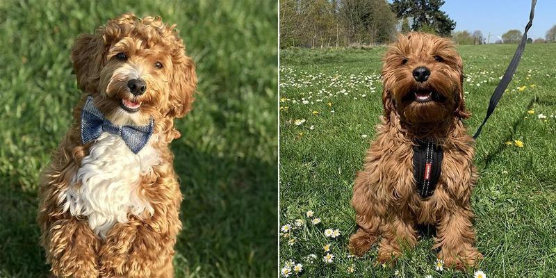 Quiz | Do you know your dog breeds?