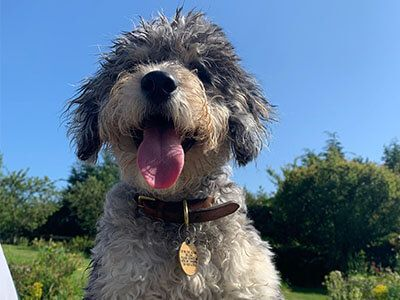 Doggy member Carlos