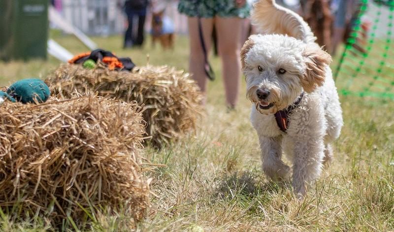 Top 5 reasons why you can't miss the best dog's day out, ever!