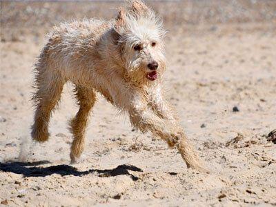 Doggy member Bernie