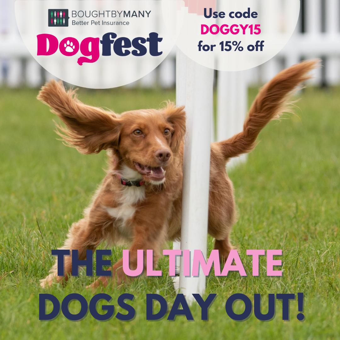 DogFest 2021 - Join BorrowMyDoggy at Cirencester Park and Tatton Park
