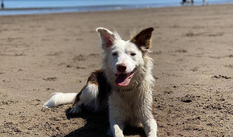 Top tips for keeping your dog cool this summer