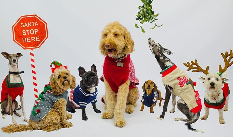 You're invited to Doggy Christmas Jumper Day!