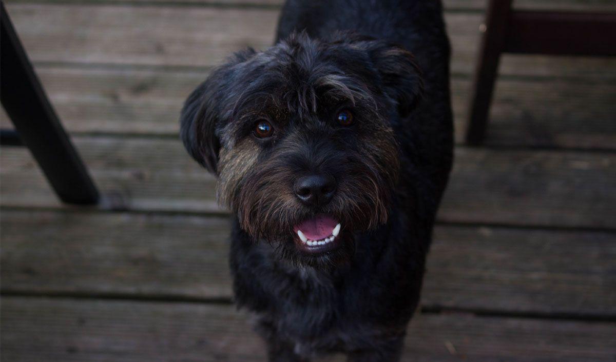 Fluffy dog outside, looking at camera. Photo by Shlag on Unsplash