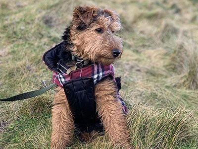 Doggy member Monty