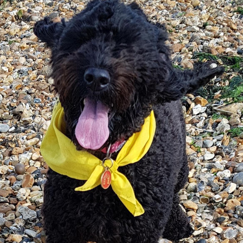Doggy member Molly