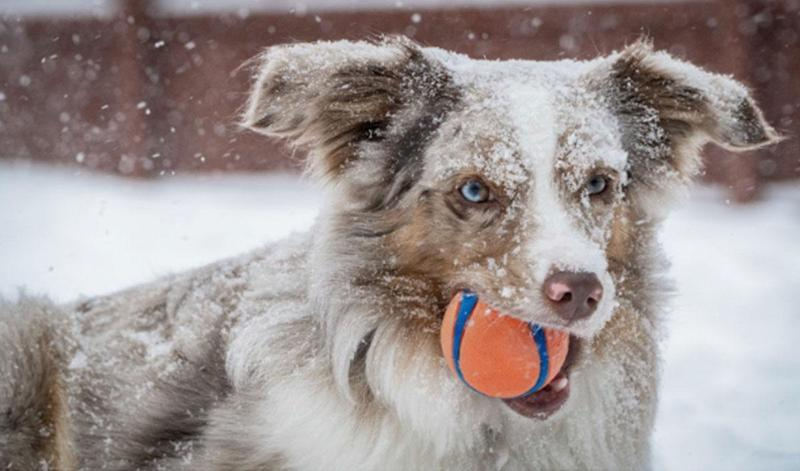 Winter adventures you can have with a dog
