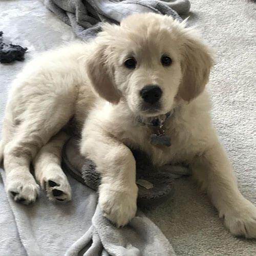 Doggy member Ashbie