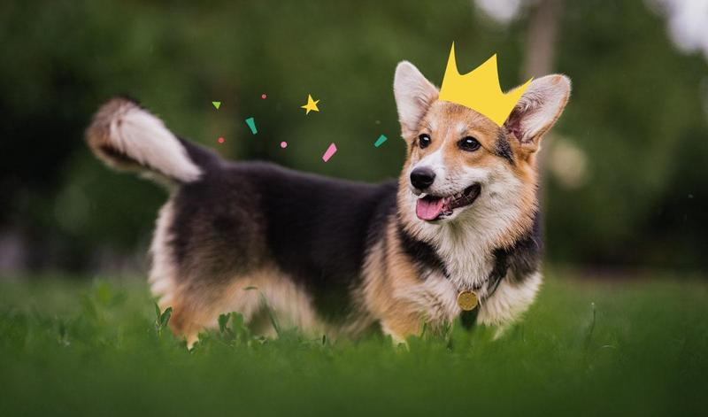 Royal dogs   Dogs loved by Kings and Queens