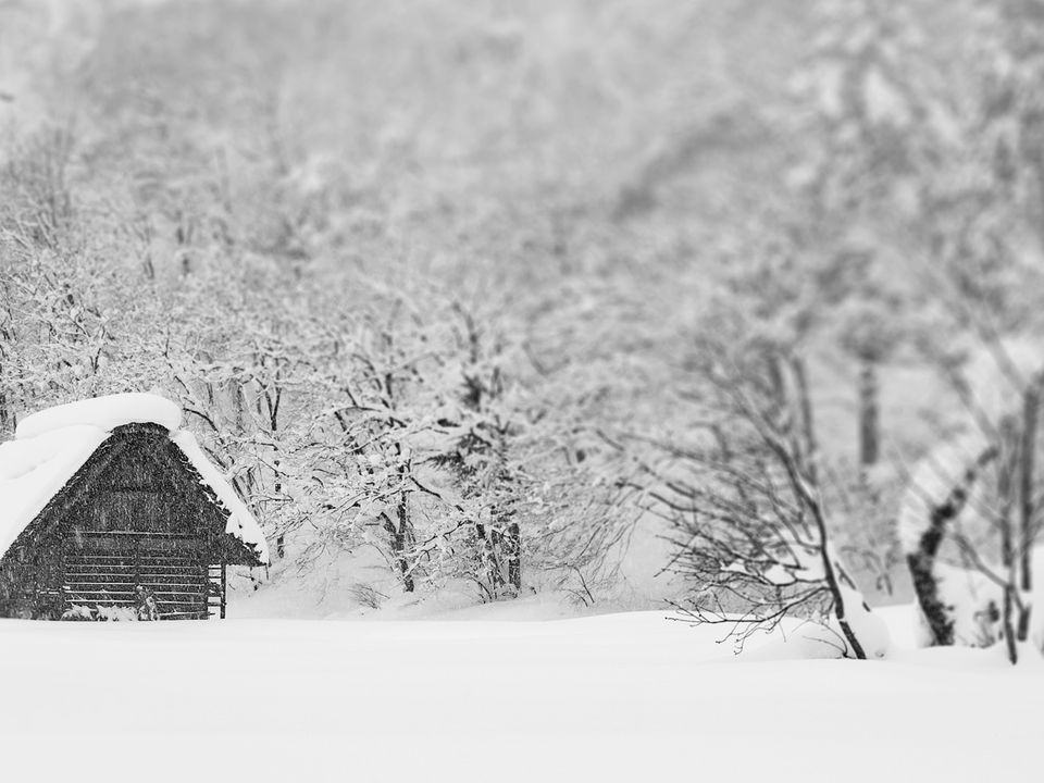 A small wooden hut nestled into the snow, surrounded by trees.
