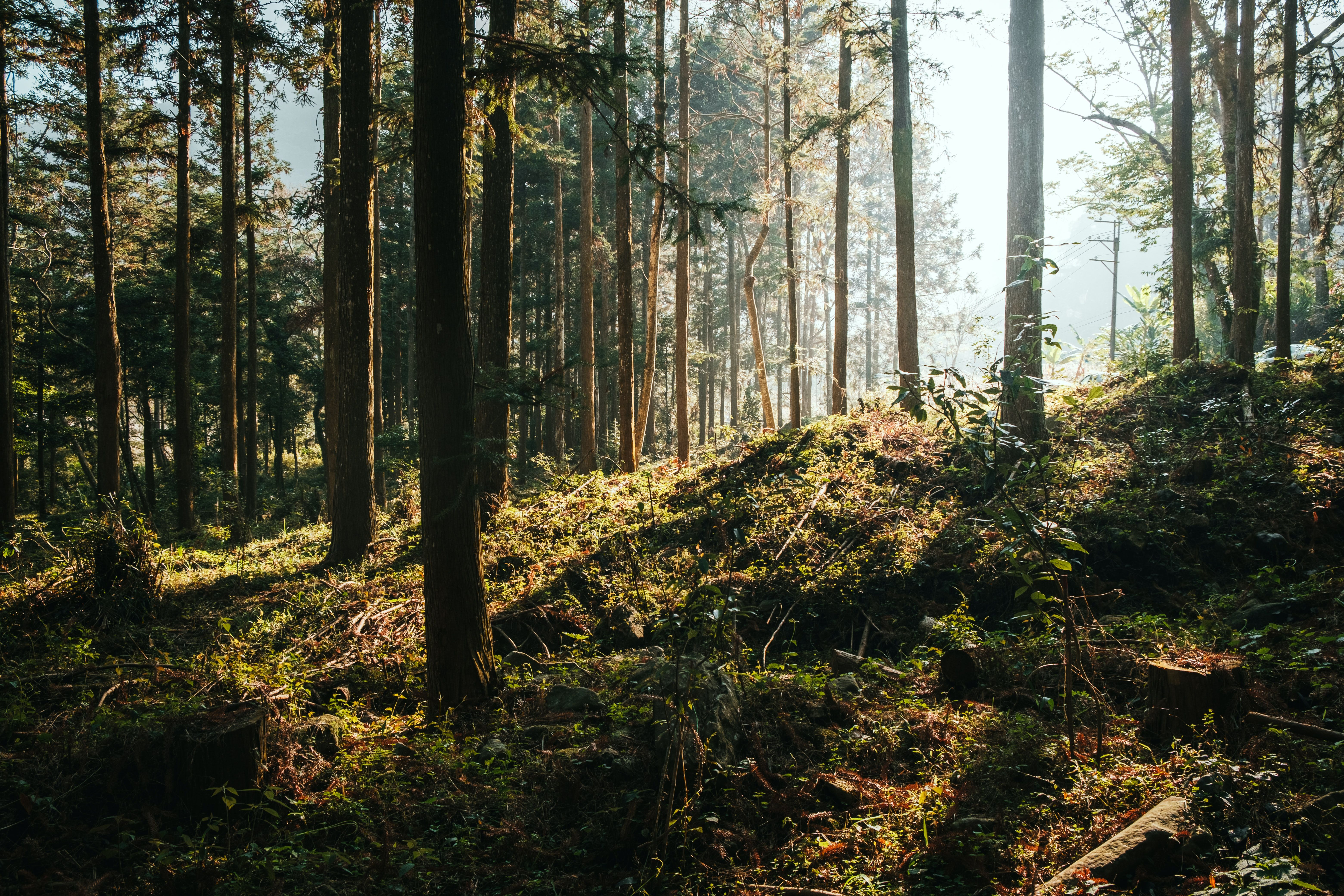 Forest trees and vegetation