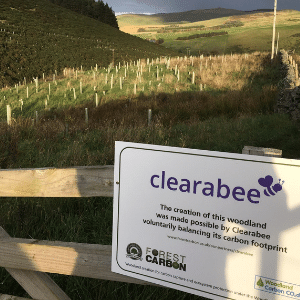 Clearabee Commits to Carbon Neutrality With New Forest