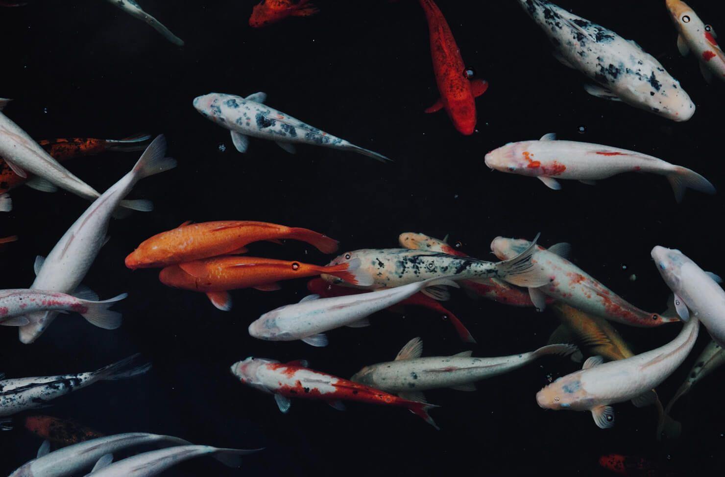 raw fish hazardous waste