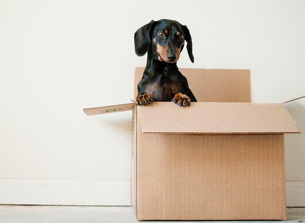 Moving house? De-cluttering is essential before moving
